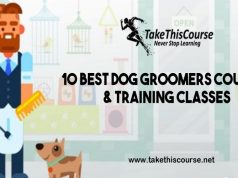 Dog Groomers Courses